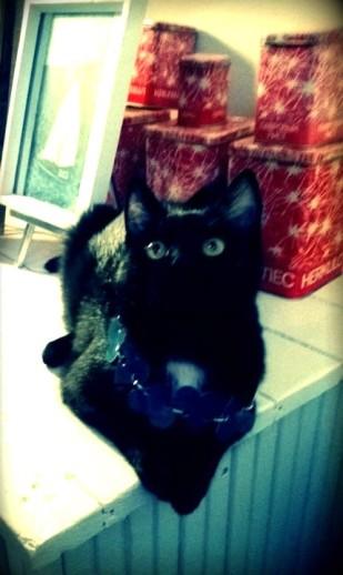 Kissakin sai omat sydämenmuotoiset helmet - jotka se kyllä heti pudisteli pois kuvauksen jälkeen.