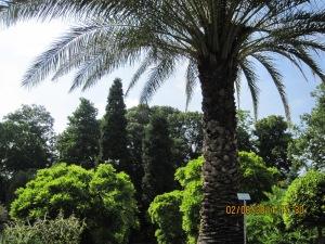 Kasvitieteellinen puutarha